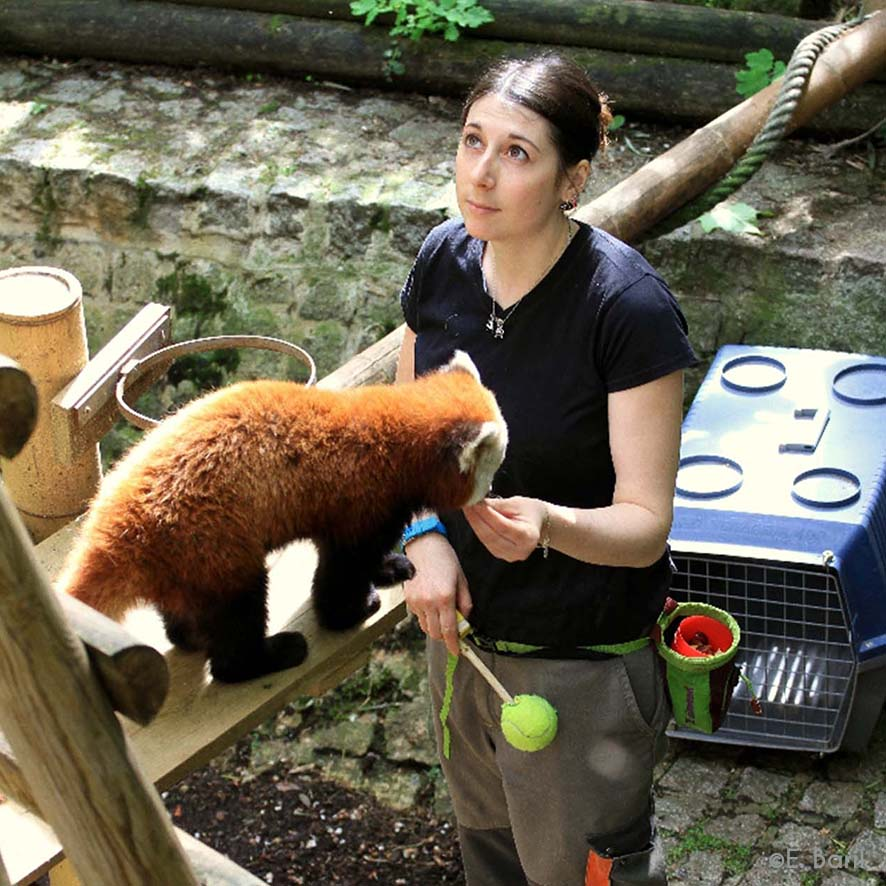 Présentation du métier de soigneur animalier Image